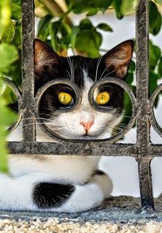 awwww-cute:  Cat from a neighbourhood always watching us :) (Source: http://ift.tt/1UCvyW2)