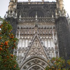 Sevilla cathedral entry and orange trees.