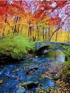Cores do outono próximo a Corvallis, Oregon, USA. Fotografia: friend of Holly Copeland on Little Miss Holls. Foto Nature, All Nature, Autumn Nature, Beautiful World, Beautiful Places, Beautiful Scenery, Beautiful Forest, Corvallis Oregon, Belle Photo