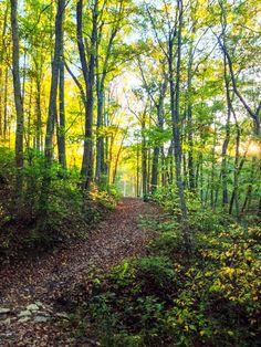 Autumn walk (Kentucky) by Vince Hill