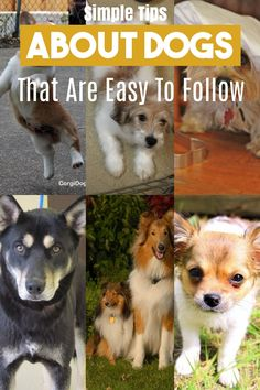 Here Is How *** Learn more by visiting the image link. Pet Dogs, Dogs And Puppies, Pets, Dog Care Tips, Pet Care, Happy Animals, Cute Animals, Dog Spay, Different Dogs