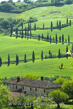 Winding road near La Foce, near Chianciano Terme, Tuscany, Italy