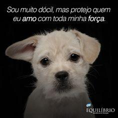 http://www.ippb.org.br/textos/especiais/editora-vivencia/os-animais-no-plano-espiritual