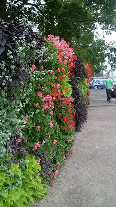 Tanskalainen kukkaseinä