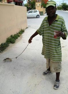 funny man walking a crab