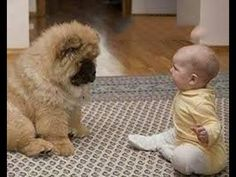 「かわいい犬」初めて人間の赤ちゃんに会った犬の反応が超面白い - YouTube