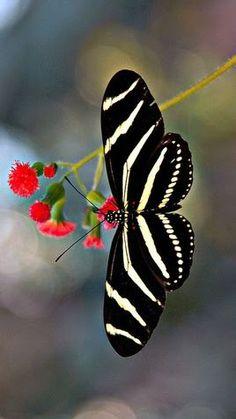 10 Beautiful Butterflies Part 5 Beautiful Bugs, Beautiful Butterflies, Amazing Nature, Simply Beautiful, Beautiful Places, Butterfly Kisses, Butterfly Art, White Butterfly, Butterfly Mobile