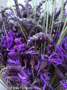 Lavender English & Spanish Lavender Flowers, Cut Flowers, Garden Beds, Spanish, Purple, Blue, Seasons, Plants, Pictures
