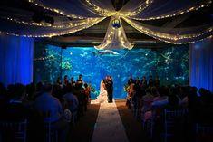 florida aquarium wedding