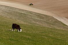 all quiet #sheep #farm