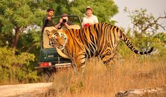 #KanhaNationalPark is the largest national park of #MadhyaPradesh