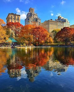 Central Park showing off the colors of fall still!