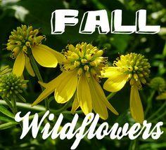 Fall Wildflowers--goldenrod & wingstem