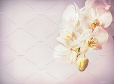 Close up of orchids blooming by VICUSCHKA on @creativemarket