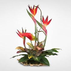 Enjoy the heat from a beautiful tropical palm even when there is snow on the ground with this gorgeous silk floral arrangement. Exotic Birds of Paradise lend he Exotic Flowers, Tropical Flowers, Summer Flowers, Silk Flowers, Exotic Birds, Unique Flowers, Fresh Flowers, Tropical Floral Arrangements, Artificial Floral Arrangements