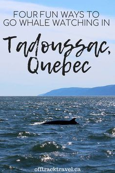 Whale watching in Tadoussac is both incredibly varied and exceptionally easy. We found four fun ways to go whale watching in Tadoussac on our recent visit How To Find Out, To Go, Quebec City, Whale Watching, Small Towns, Travel Inspiration, The Good Place, Whales, Vacation