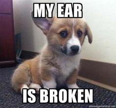 Broken Ear #funny