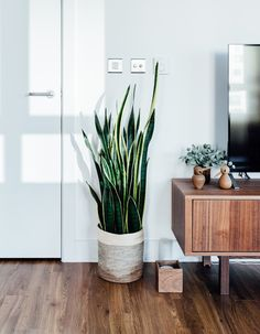 The best air-purifying plants that will survive life in an office Which indoor plants are best suite Decor, Best Air Purifying Plants, Room, House, Interior, Office Plants, Home, Cool Furniture, Living Room Plants