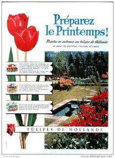 Original-Anzeige / Publicité 1957 - (en français) TULIPES DE HOLLANDE - ca. 200 x 270 mm