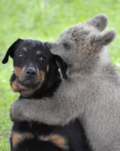 Who doesn't love bear hugs?