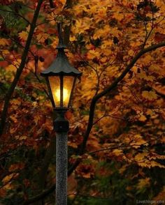 Autumn lamp post light outdoors trees autumn leaves