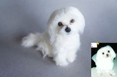 This is Mugsy, a Maltese no longer with its owner but dearly missed. #JanetsNeedleFelting #matlese #petPortrait