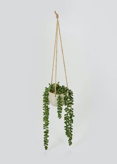Hanging Plant in Cement Pot x x – Multi – Matalan Cement Pots, Ceiling Hanging, Hanging Pots, Potted Plants, Plant Hanger, Matalan, Greenery, How To Look Better, Planter Pots