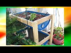 DIY Aquaponics For Beginners (Barrel, Fish Tank, IBC Tank etc) - YouTube