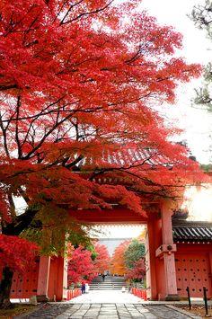 Fall in Shinso Gokuraku-ji (Shinnyo-do) Temple, Kyoto Japan