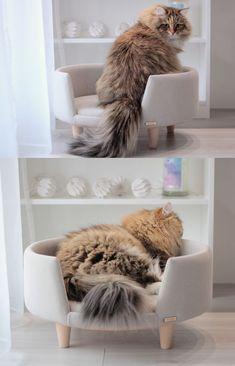 Zoe siberian cat #catbed #cat #furnitureforpets