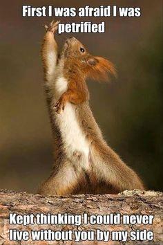 Funny Animals-tina turner squirrel