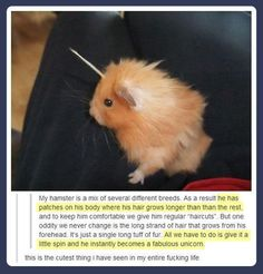 Unicorn hamster…I laughed soooo hard. I don't think anyone who's never had hamsters understands just how funny this is.