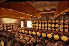 Our barrique cellar