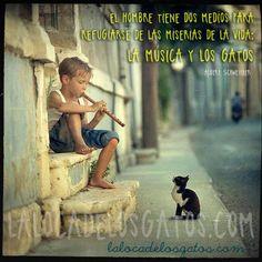 cita-musica-gato