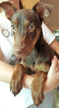 ACE Animal Care España - Ambu Animal Care, Pet Care, Charity, Dogs, Animals, Animaux, Doggies, Animal, Animales