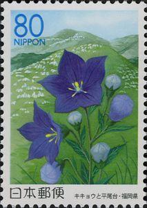 Chinese Bellflowers & Hiraodai Karst Plateau - Fukuoka