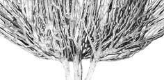 Tree Paper. Grafite pencil. 2015-2016 maria-fadeeva.com/