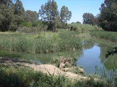 Desembocadura del Rio Parroso, al Rio Hueznar. Villanueva del Rio y Minas. Sevilla ( España)