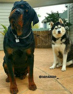 both of you are so beautiful! #rottweiler