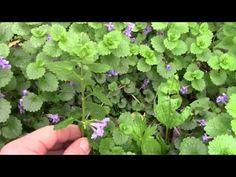 Essbare Wildkräuter und Wildblüten Teil 1 - YouTube