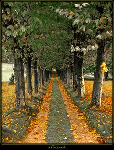 ✯ Autumn in France