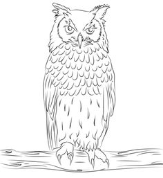 Bengalese Eagle Owl Coloring Page From Owls Category Select 30351 Printable Crafts Of Cartoons Nature Animals Bible And Many More
