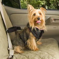 Fancy | Pet Vehicle Safety Harness