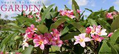 https://flic.kr/p/HycRta | Naples Botanical Garden June 24th 2016 | A tour of…