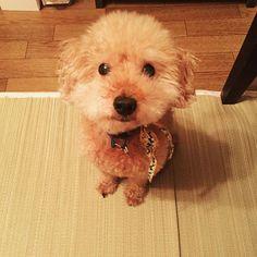 My family is very cute:)) #photography #cocoro #coregraphy #写真撮ってる人と繋がりたい #写真好きな人と繋がりたい #ファインダー越しの私の世界 #写真の奏でる私の世界 #ふぉと #写真で伝えたい私の世界 #カメラ女子 #ペット #dog #愛犬