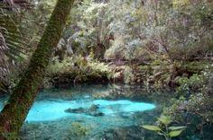 Fern Hammock Springs Ocala National Forest, Florida
