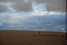 Fotografie Matthias Schneider 160321 25798 Essaouira Schafherde
