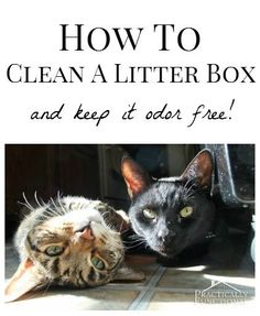 How to clean a litter box and keep it odor free! It's easier than you think!