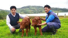 Nace el primer animal clonado en Perú - http://www.notiexpresscolor.com/2016/11/25/nace-el-primer-animal-clonado-en-peru/