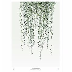 String of pearls is a new addition to the Botanics series of unframed art prints of watercolours by artist Maaike Koster and supplied by My Deer Art of the Netherlands. This is a limited edition of 500 and is signed by the artist with handwritten numbering. The art print is sold unframed and shipped in a cardboard tube.